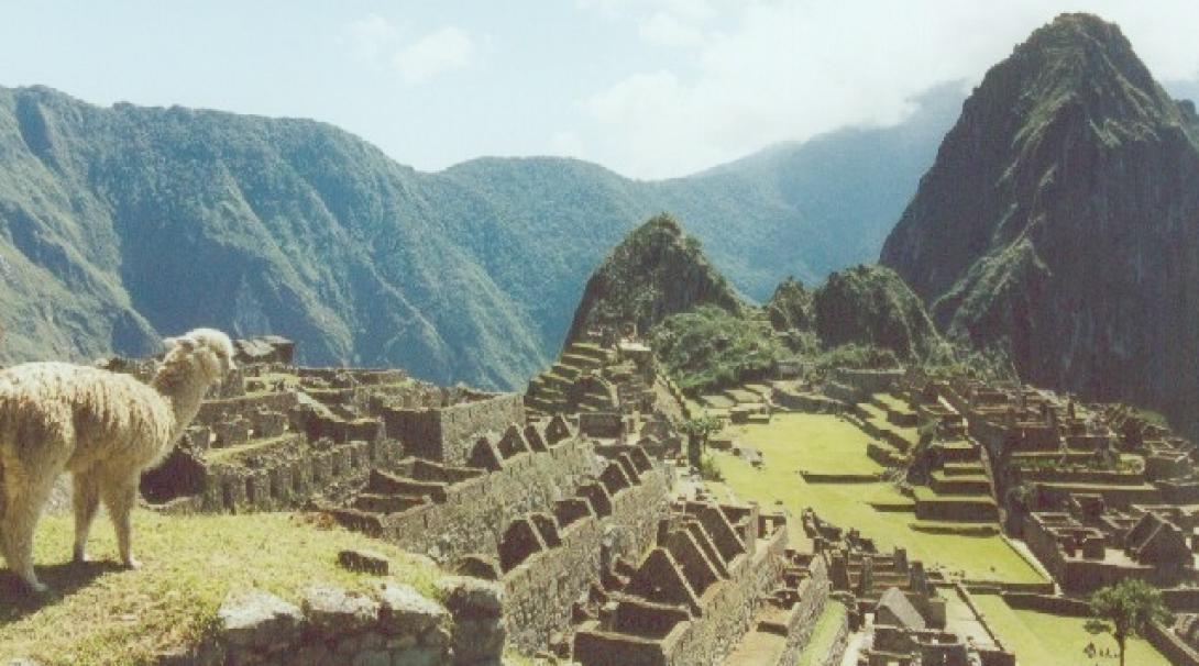 南米ペルーの世界遺産マチュピチュを見下ろすアルパカ